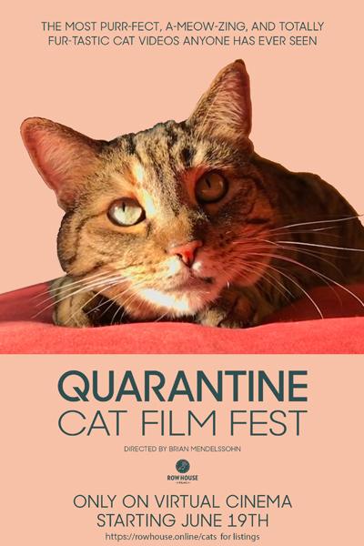 Quarantine Cat Film Festival
